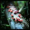 (19/77) Tags: slr film nature mushroom malaysia 1977 negativescan kiev88 mediumfromat kodakektacolorpro160 autaut canoscan8800f arsat80mmf28 myasin