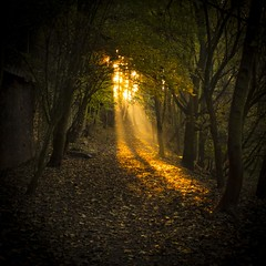 Autumn Magic (Gilderic Photography) Tags: wood morning autumn light tree green fall nature leaves forest automne dark square lumix gold leaf europe raw ray belgium belgique belgie or magic perspective chartreuse panasonic arbres sombre fantasy lumiere liege foret arbre luik enchanted bois matin lightroom 500x500 gilderic superaplus aplusphoto lx3 dmclx3 oblats grivegnee