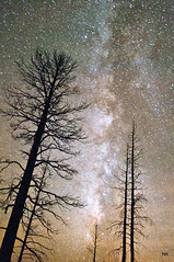 Trees on Fire! and so is the sky! It's the Milky Way Galaxy! (NikonKnight) Tags: longexposure trees mountain clouds stars fire ut grandcanyon az galaxy bryce zion fredonia kanab northrim milkyway hwy89a numberless azhwy67about30milesshortofthegrandcanyonnorthrim