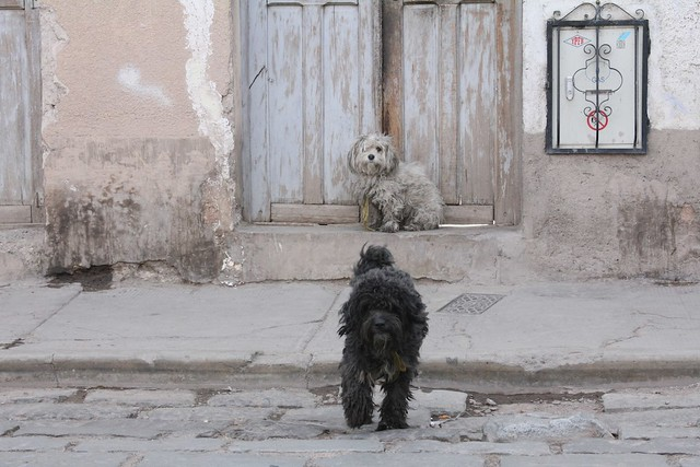 Hunder i Sucre