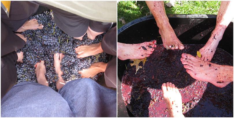 Morgan Creek Grape Stomp 2010