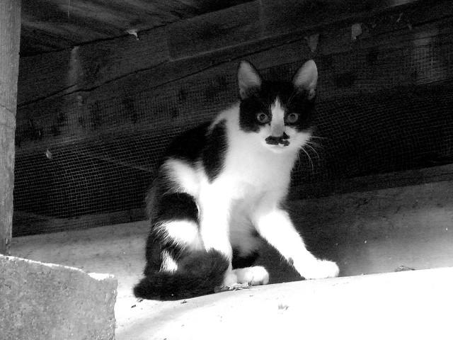 Today's Cat@2010-10-11