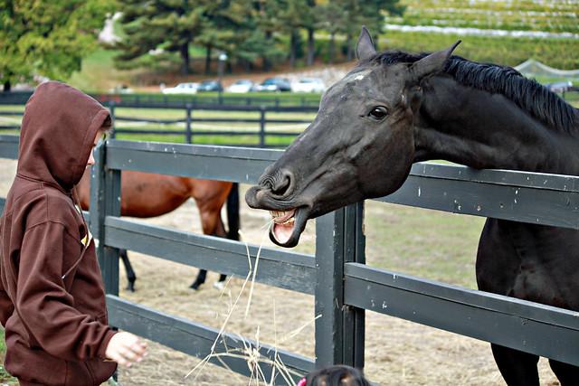 Horse eats