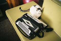 The Cat and Accordion (T-Terror) Tags: film analog cat accordion olympusxa fzuiko35mmf28 walgreens200