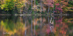 adirondack glow ([Adam Baker]) Tags: autumn trees ny reflection nature canon landscape outdoors hiking foliage adirondack 24105l adambaker seventhlake mooseriverplains 5dmarkii