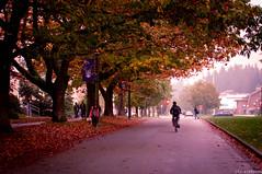 An Autumn Day {125/365}