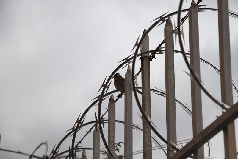 bird-fence