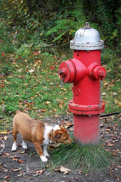 Doggie Hydrant