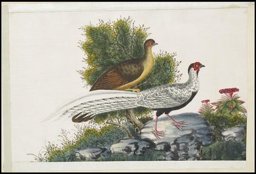 Bird Album b