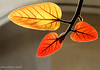 Light Painting ! (Harvarinder Singh) Tags: sunlight leaves colorphotoaward theunforgettablepictures harvarindersinghphotography harvarindersingh