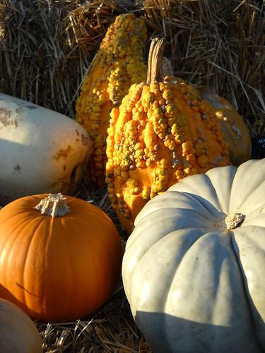 Longwood October 2010 117