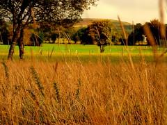 Prado (Fotos de vida.) Tags: landscape paisaje paisagem galicia prado paysage landschaft paesaggio maisema landschap pemandangan  paisatge landskap hierba landskab  peyzaj krajobraz peisaj   pejza