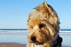 Olito (Oly_ [Sin tiempo]) Tags: beach playa explore oly 1756 19102010