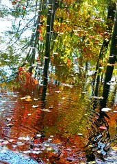 Autumn Ripples (Stanley Zimny (Thank You for 19 Million views)) Tags: park autumn trees reflection tree fall nature water colors leaves automne catchycolors leaf colorful colours seasons natural fallcolors herbst autumncolors fourseasons autunno autumnal colorexplosion 4seasons sgis jesien jesiennie