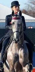 Saddlebred headshot (Martina V.) Tags: world horse lexington kentucky ky games fei equestrian 2010 saddleseat kentckyhorsepark