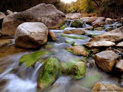 Preparazione (Finasteride (Magro Massimiliano)) Tags: pietre ruscello muschio monti alghe roccie tolfa riserva