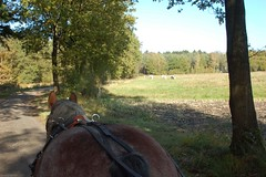 DSC_4172-141 (Ton van der Weerden) Tags: horse de cheval pferde nederlands jos draft chevaux belge belgisch trait toertocht kaltblut attelage trekpaard aangespannen zugpferd trekpaarden leenderstrijp peerlings