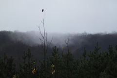 Mist on Rib Mountain (Northernstar28**) Tags: mist fog pinetrees ribmountain wausauwi