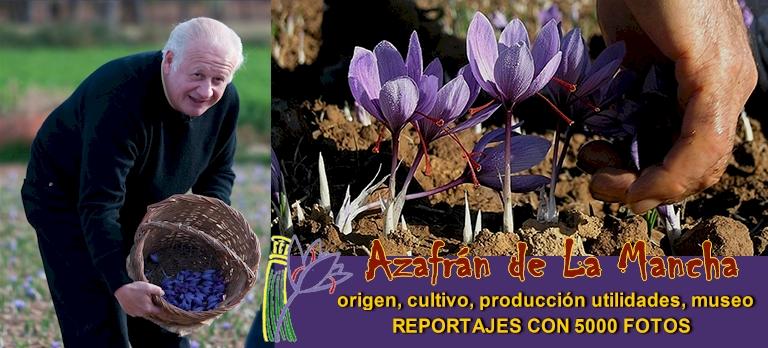Origen, cultivo, producción, utilidades - MUSEO DEL AZAFRÁN DE MADRIDEJOS