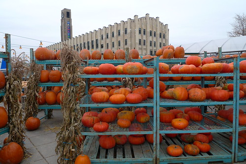 the pumpkins of atwater market
