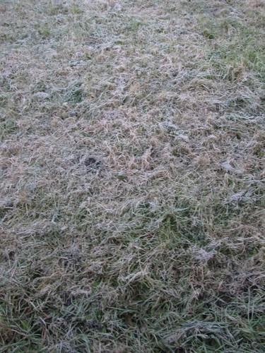 Frost bitten lawn