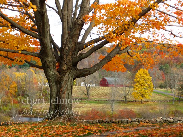 IMG_3627_farm.jpg