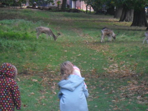Looking at deer