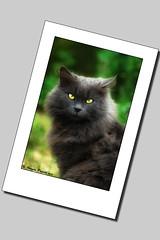 Sguardo felino (oraziopuccio) Tags: pet cats pets white cute animal animals cat fur nose eyes nikon kitten feline chat kitty kittens natura whiskers ojos gato felino gatto gatti animali micio gattino d40 nikond40 oraziopuccio