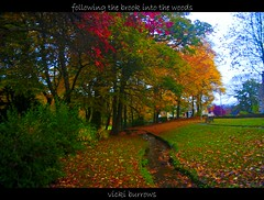 FOLLOWING THE BROOK... (vicki127.) Tags: autumn trees red sky green water leaves bench bury canon300d branches greatshot brook flickraward october2010 ilovemypics 100commentgroup adobephotoshopcs5 ringofexcellence vickiburrows tottingtonmemorialgardens