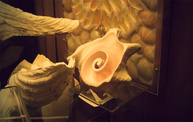 MoS, shells