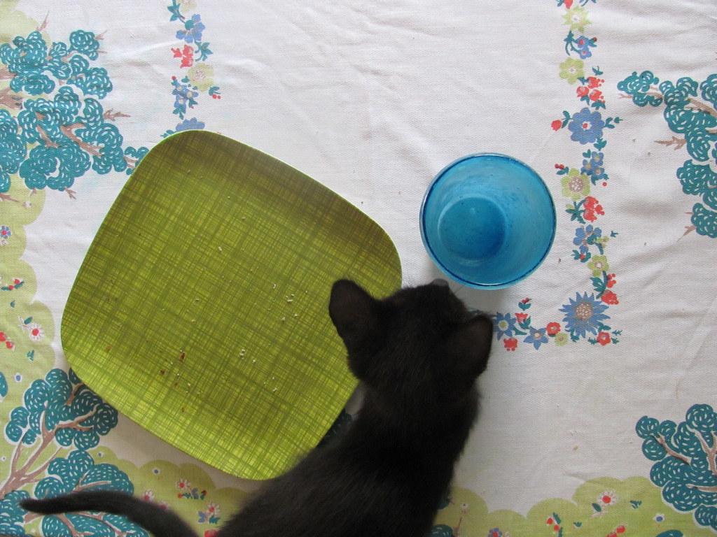kitten breakfast