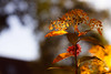 6/50: Autumn Colors (DaBok) Tags: autumn nature herfst natuur almere project50 twittographers