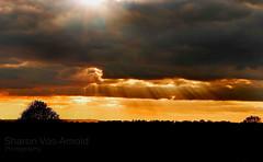 Forecast ... ( Angel of light ) Tags: autumn sunset tree fall sunshine rain weather silhouette clouds mixed walk seasonal flare rays showers rainclouds landcape sunflare raysoflight jacobsladder englishweather angeloflight2009 welcomeuk