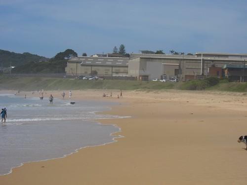 MM dog beach