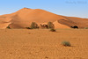 The Desert - Explore (TARIQ-M) Tags: tree texture landscape sand desert dunes camel riyadh saudiarabia hdr الصحراء الرياض صحراء خيمة رمال جمل ابل رمل canonef70200mmf4lusm خيام طعوس طعس نياق المملكةالعربيةالسعودية canon400d الرمل ناقة خطوط نفود الرمال كثبان طلح تموجات ☆thepowerofnow☆ تموج نفد
