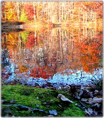 Autumn Reflections (FlipMode79) Tags: autumn color fall leaves reflections va dcist burke burkelake mywinners mygearandmepremium flipmode79