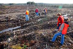 northern pulp biomass harvest 11, nov 09 (JIBS2010) Tags: novascotia forests acadianforest northernpulp bluewolfcapital