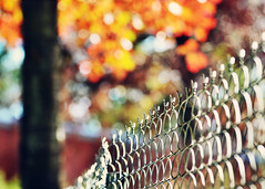 An ordinary fence. {Explored} (eRachel11) Tags: autumn color fall fence zoo birmingham nikon bokeh alabama chain link fencing friday d7000 nikond7000 happyfencefriday