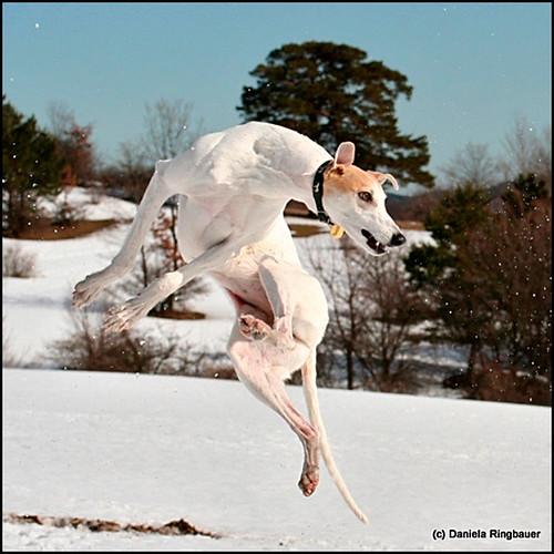 Daniela-Ringbauer-Klassiker-Katatjutas-Greyhound