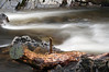 Waterlogged (Mark McKie) Tags: tree water river nikon rocks timber stump galloway d90 wigtownshire nikond90 minnigaff markmckie