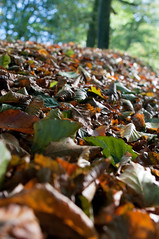 nadder-diary-autumncolours-4 (Malcolm Anderson) Tags: autumn colour leaves lewesdon nadderdiaryautumncoloursassignment