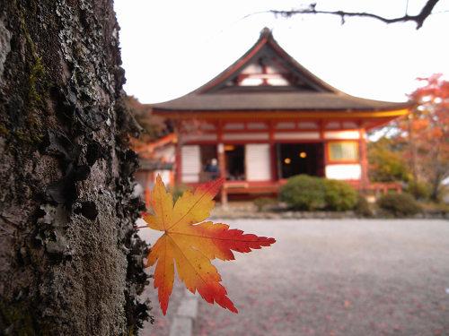 談山神社(紅葉)@桜井市-15
