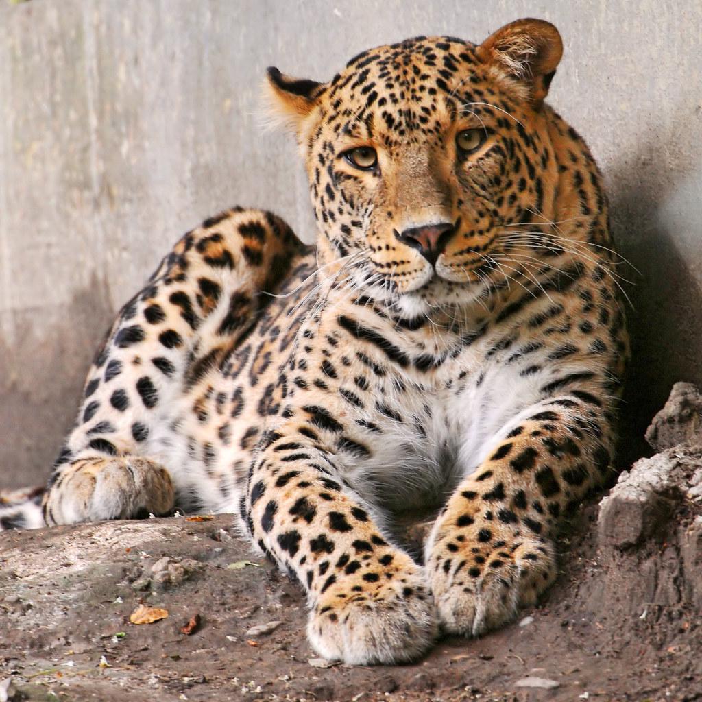 Картинки хищники животные