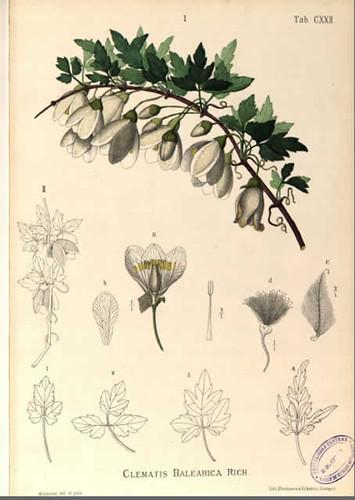 ilustración