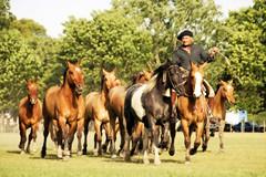 La madrina tobiana (Eduardo Amorim) Tags: horses horse argentina criollo caballo cheval caballos cavalos pferde herd cavalli cavallo gauchos pferd pampa chevaux gaucho campero provinciadebuenosaires gachos sanantoniodeareco areco gregge crioulo troupeau caballoscriollos herde criollos tropillas pampaargentina camperos tropilhas tropilla crioulos cavalocrioulo tropilha caballocriollo campeiros campeiro eduardoamorim cavaloscrioulos iayayam yamaiay pampaargentino