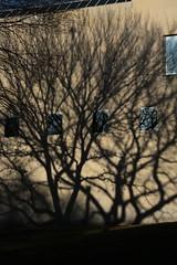 Maze of Shadows (Erica Robyn) Tags: lighting nyc newyorkcity blue shadow tree window wall centralpark met metropolitanmuseumofart sooc ericarobynphotography ericarobyn