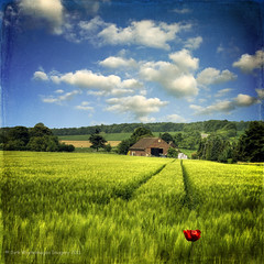 The Farm (nave version) (Dyrk.Wyst) Tags: blue trees light red sky flower verde green rot texture field barley azul clouds composition rural square landscape rouge licht spring rojo colours farm flor feld himmel wolken colores poppy dreamy colourful grn blau blume landschaft frontpage bume bunt bauernhof gettyimages farben frhling klatschmohn gerste lndlich hren vertrumt mohnblte grannen gerstenfeld platinumheartaward platinumheartawards flypapertextures