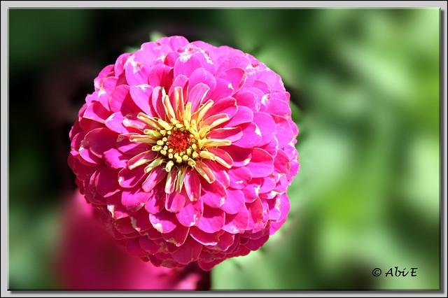 9 Flor
