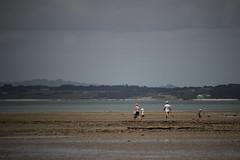 Family outing (neil.bather@xtra.co.nz) Tags: family beach awhitu regional park seascape seashore manukau harbour