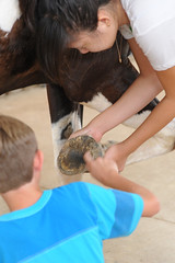 hoof picking (Montgomery Area Nontraditional Equestrians (MANE)) Tags: al mane pikeroad
